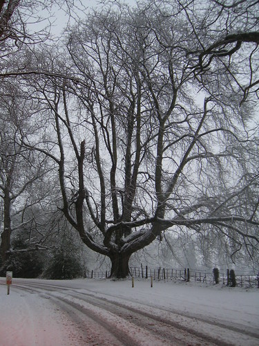 Snowy Day in Shropshire, 9 Feb 2006