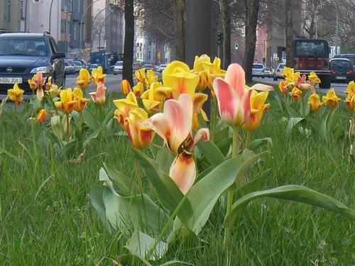 Berlin Germany:Spring in Schöneberg von Ihnen.