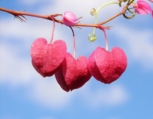 String of hearts by aussiegall