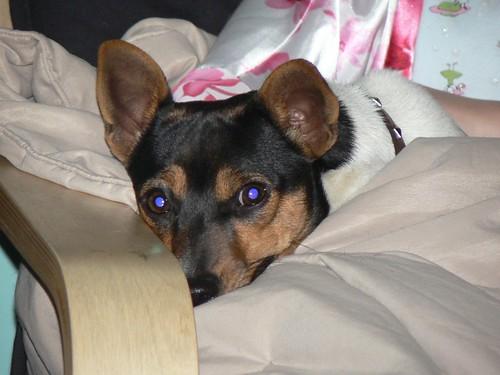 Ruby, snuggled in