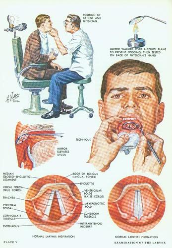 larynx07_large