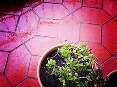 31 days - 31 photos: Day 15 - Rain