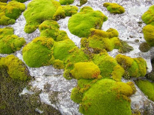 Winter moss 2