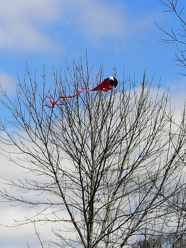 Prospect Park Trees Love Kites