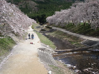 blossoms along the Ugui River, Japan
