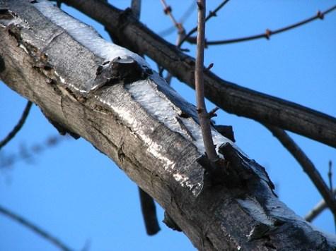 Iced Tree -- http://www.flickr.com/photos/lexnger/373693709/