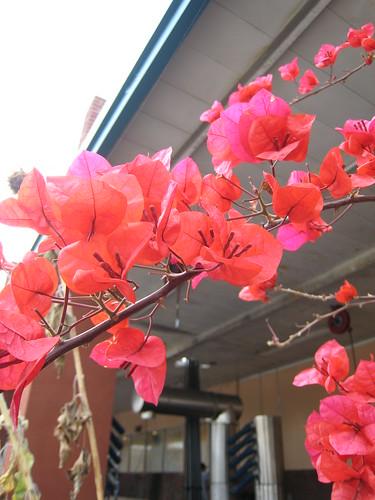 Walnut-Hill Car Wash flowers