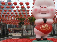 the year of the pig!!