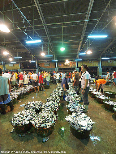 Navotas manila fishport wholesale market fish  Buhay Pinoy Philippines Filipino Pilipino  people pictures photos life Philippinen  菲律宾  菲律賓  필리핀(공화�)