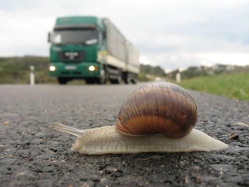 snail vs. truck