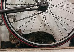 Cats dig singlespeeds