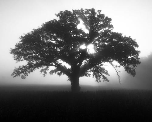 The Tree 31