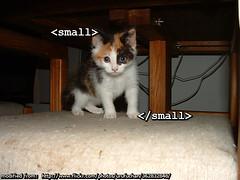 small tag