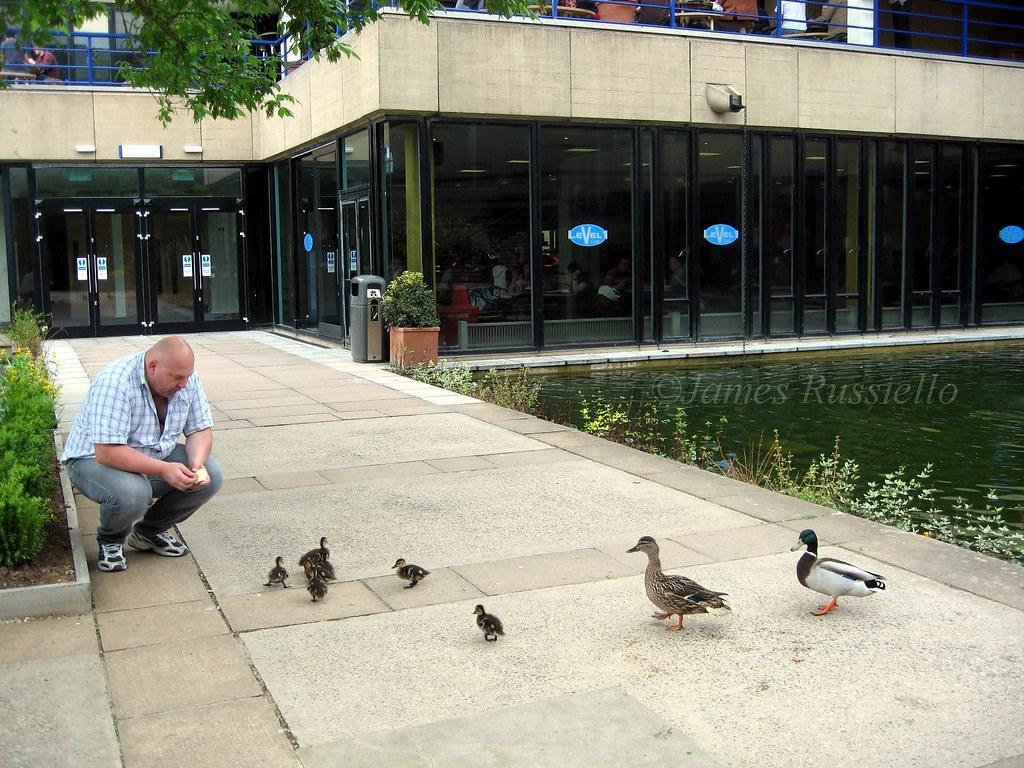 070425.03.SO.Bath.ClavertonDown.BathUni.Goose...