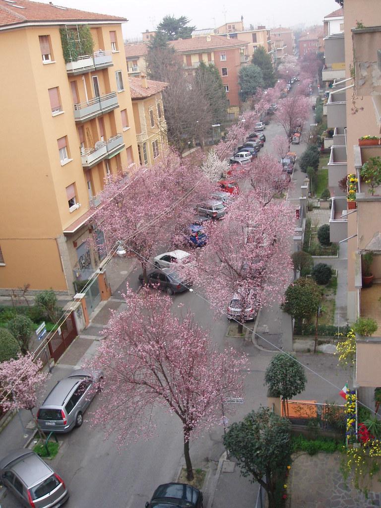 mi calle desde el balcòn
