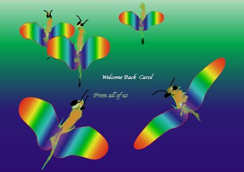 Carol's butterfly card