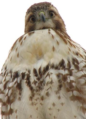 Hawk Eyes -- http://www.flickr.com/photos/lexnger/365252330/