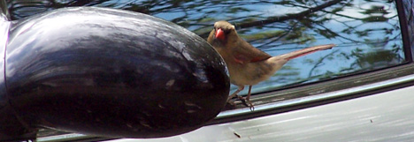 Bird on a Window Ledge