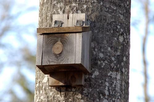Strange nesting-box