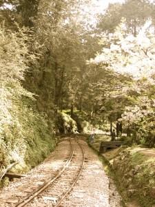 阿里山鐵道。元毓拍攝