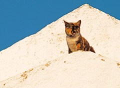 Cat on a bright white roof