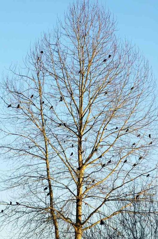 treewithbirds.jpg