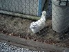 straycat2007-03-03