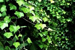 Green silence / Silencio verde