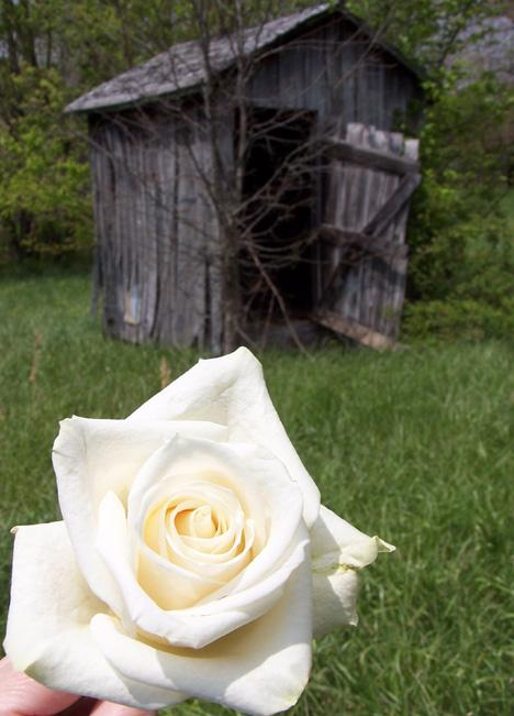 Rose Shed