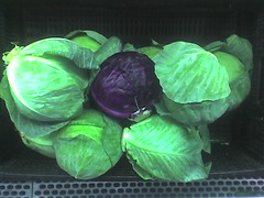 Lonely Cabbage