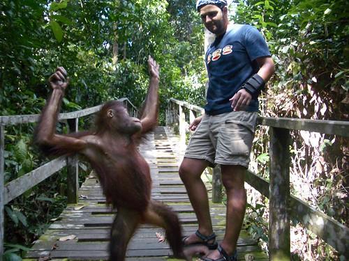 Orangutan Encounter Two by John-Lee.