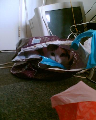kat in boodschappentas