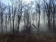 turtle woods in fog
