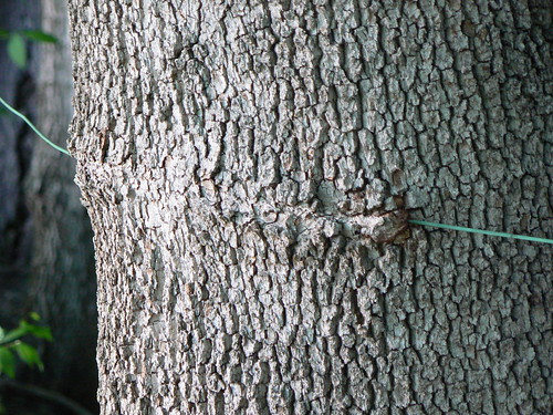 Tree Eating Wire