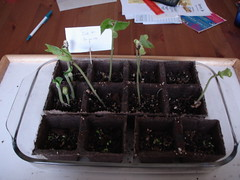 Sprouts!