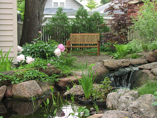 pond, peonies, and bench