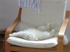 Il mio gatto Nuvola