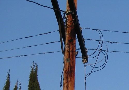 Woodpecker on Telephone Pole