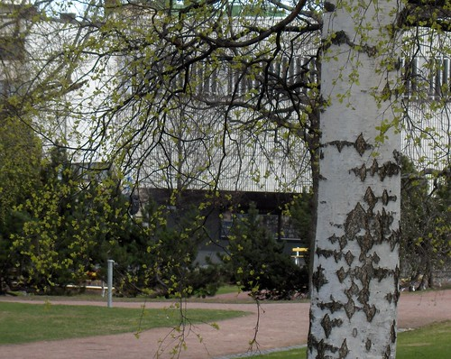 Birch, Building and Path