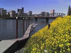 Portland Clear