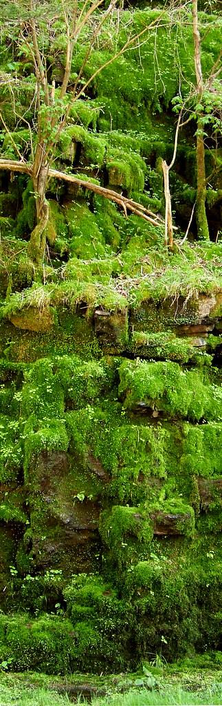 roadside moss garden