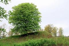 Burial mound, Borre