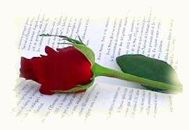 Rosa y libro en San Jordi