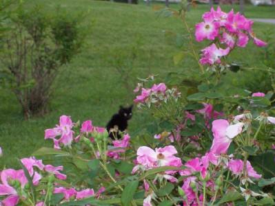 bev in roses