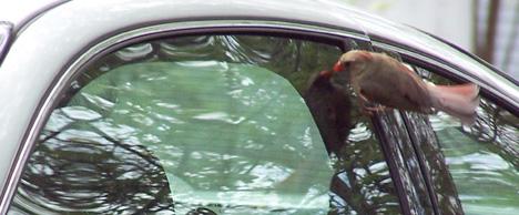Bird on a Window