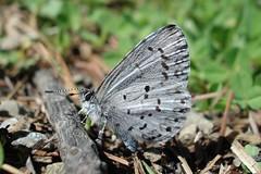 spring azure