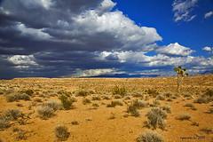 The American Desert, Mesquite
