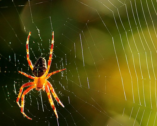 spider and web por novon.