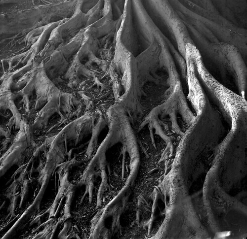Roots by mutbka, on Flickr