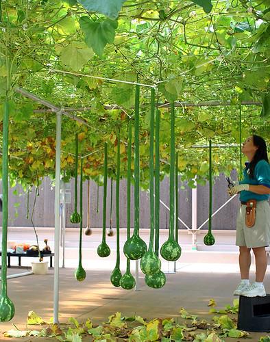 hydroponics ปลูกผักไร้ดิน ผักไฮโดรโพนิกส์